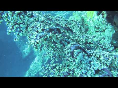 U.S.A.T. Liberty - Dive Tulamben Photos (11.28.2012).mov