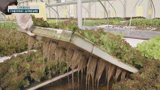 (유기농 농업) 수경재배의 새 바람, '아쿠아포…