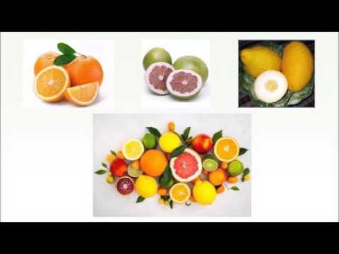 Rutaceae or the Citrus family
