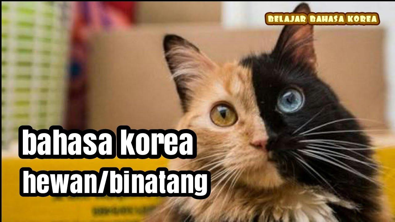 Nama Nama Hewan Dalam Bahasa Korea Kosa Kata Youtube