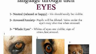 Body Language & Behavior - Dogs