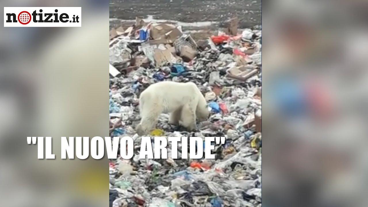 L'orso polare stremato rovista tra i rifiuti: le immagini drammatiche | Notizie.it