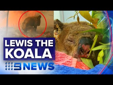 Woman Reunited With Brave Koala She Rescued From Fire | Nine News Australia