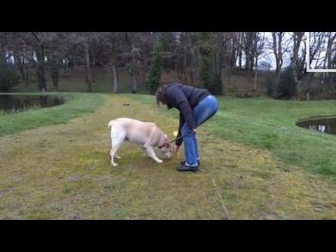 apprendre à son chien à pister