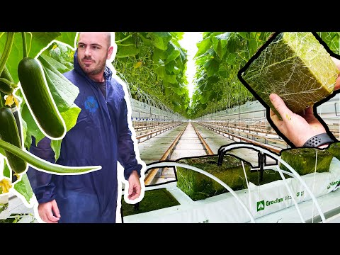 Advanced Hydroponic Greenhouse Tour & RockWool as Growing Media for Hydroponics at Home