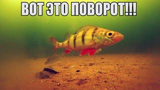 КРОШКИ В ДЕЙСТВИИ Рыбалка Реакция рыбы Подводная съемка