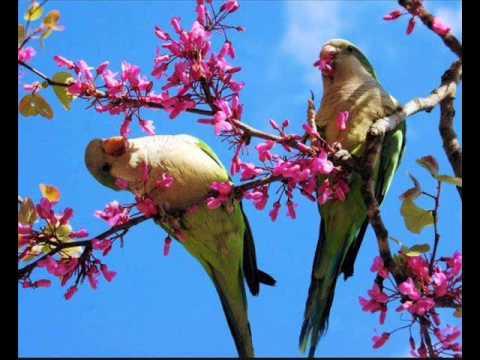 - Primavera uccelli primavera colorazione pagine ...