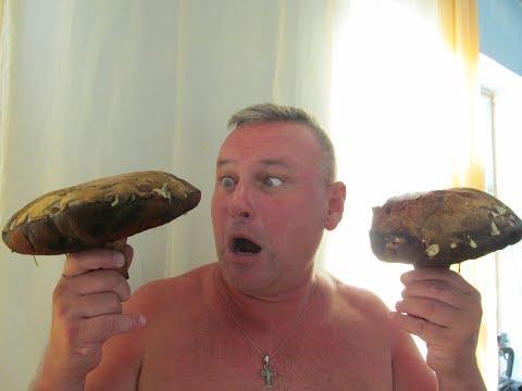 Крым! Грибы монстры после засухи!!! thumbnail