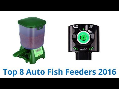 8 Best Auto Fish Feeders 2016