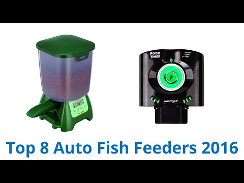 8 Best Auto Fish Feeders 2016