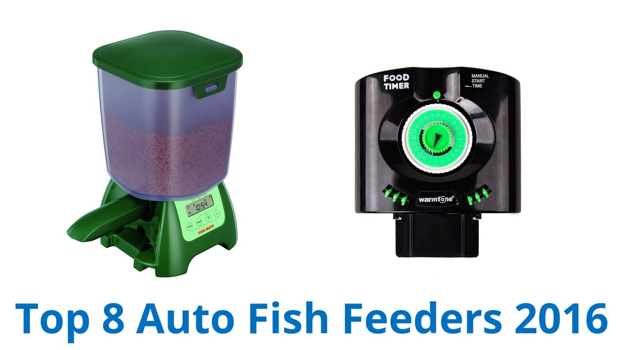 double feeder image exterior battery automatic fish motor of auto house interior pond and best a