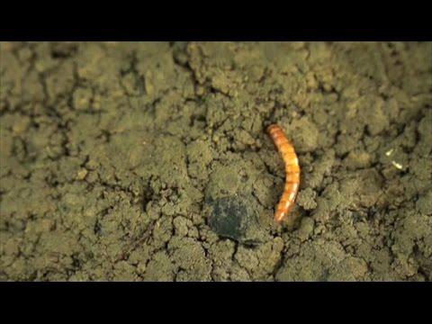 способы борьбы с паразитами организме человека