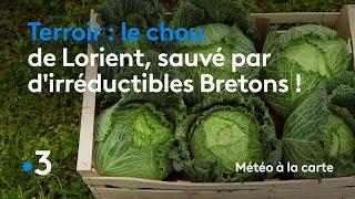 Le chou de Lorient, sauvé par d'irréductibles Bretons ! - Météo à la carte