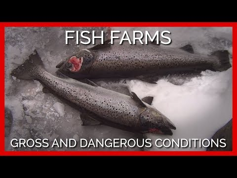 This Fish Farm Is Teeming With Parasites And Chemicals