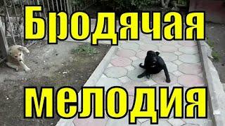 Бродячая собака мелодия Маленькие прикольные собачки смешные собаки животные приколы про собак(, 2017-03-25T17:18:13.000Z)