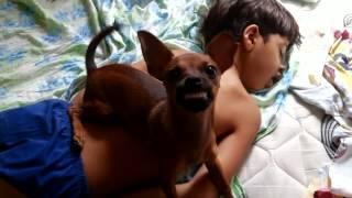 Acordando o Filho mais o Cachorro não deixa - ACORDA JOÃO !!