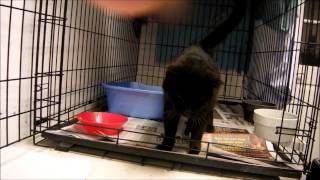 Artie First Ever Crate Trained Cat