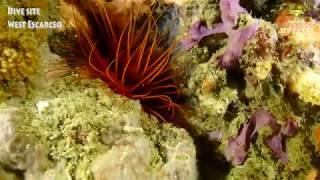 웨스트 에스까르시오 ㅣ사방비치포인트 [스쿠버다이빙/scubadiving/코브라다이브/사방비치] West Escarceo sabang