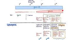 Brandl's Basics: Beta-lactam antibiotics - The Cephalosporins