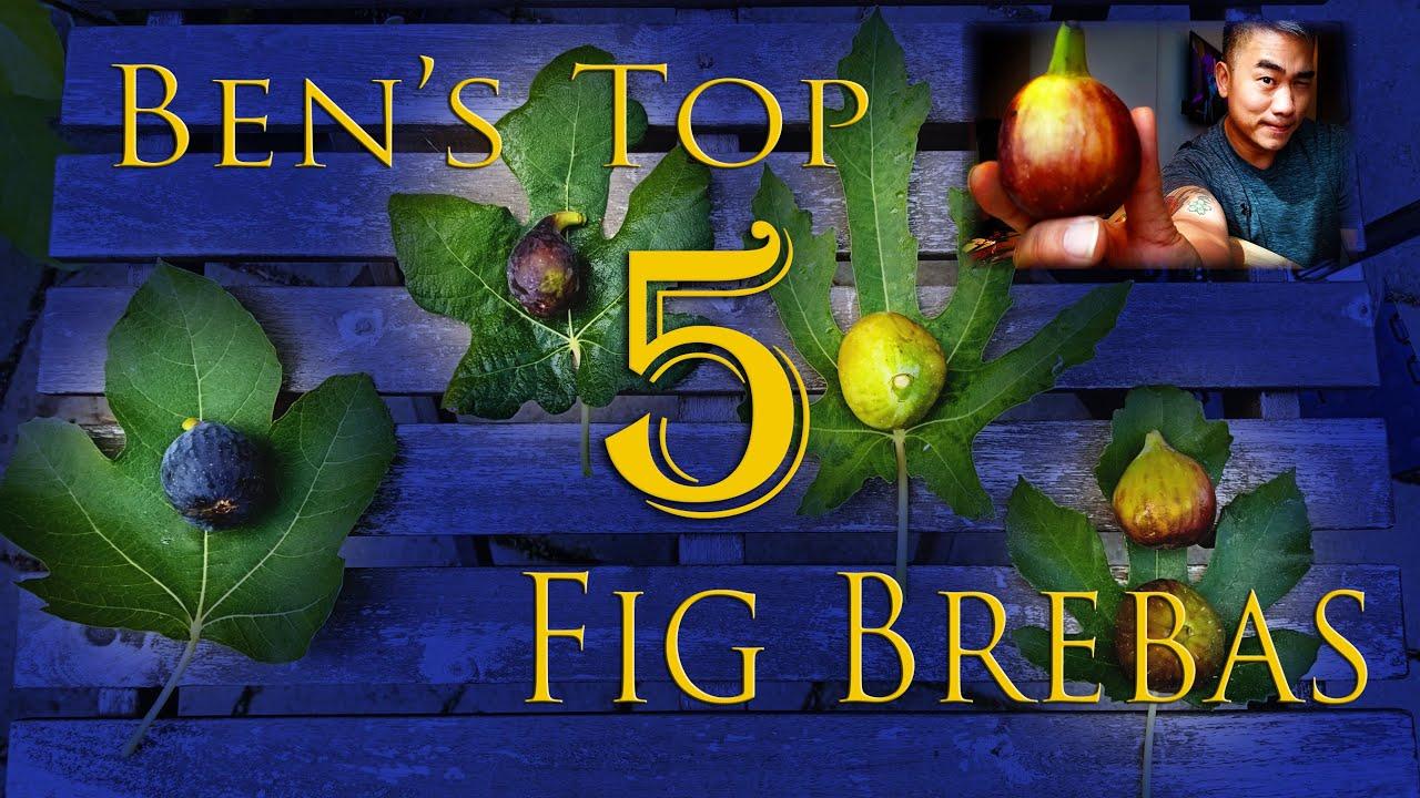 Ben's Top 5 Fig Breba varieties from 2020