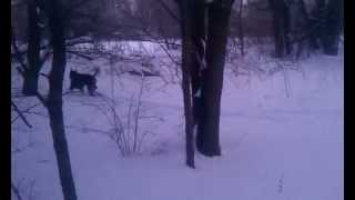 "My Two Doberman Pinschers Having Fun In 15""+ Of Snow 2/2/15"