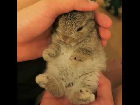 Cute little bunny 20936 - Animal Collection - Animal