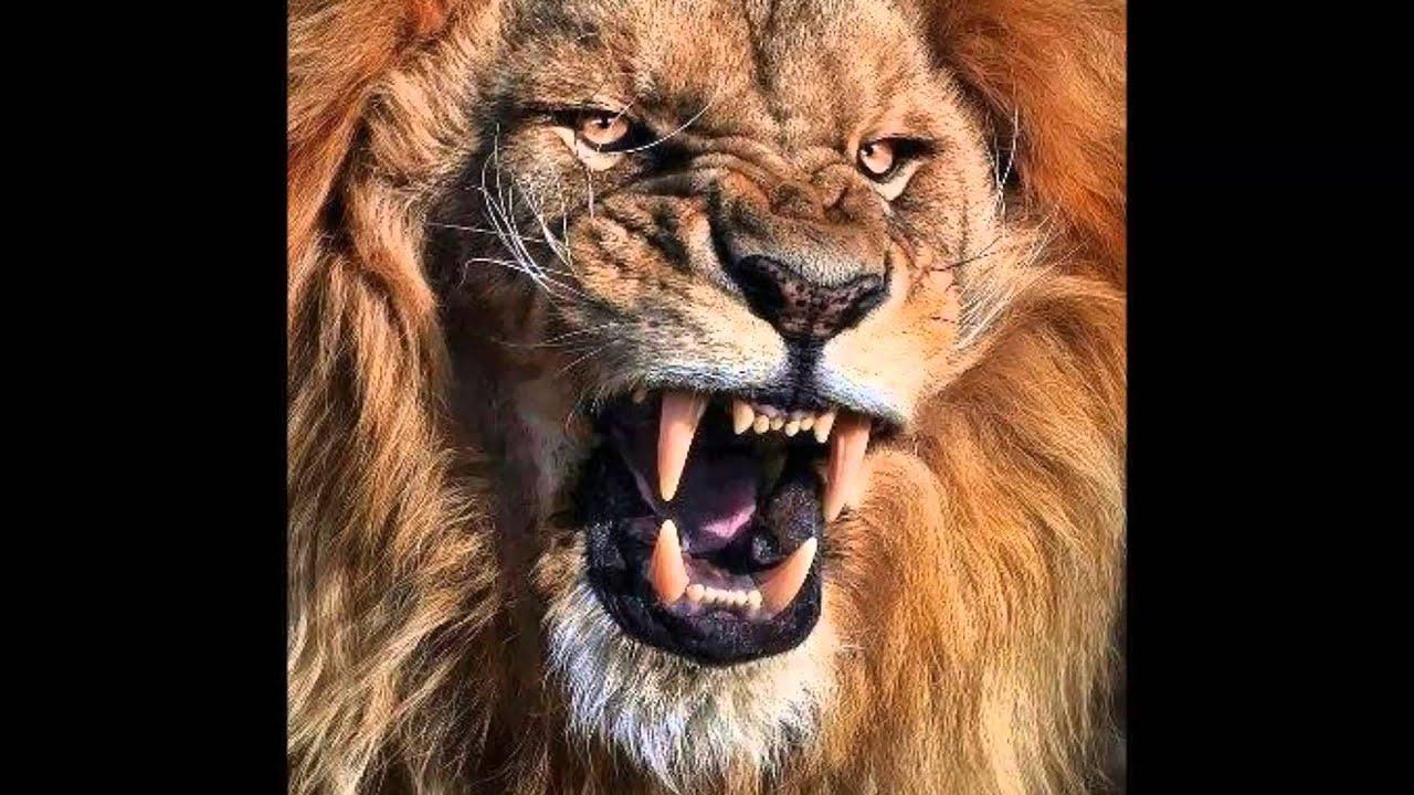 Babylon projekt il leone perduto fede nel cuore youtube for Immagini leone hd