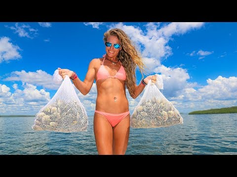 HOW TO Catch & Cook Scallops!