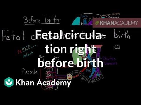 Fetal circulation right before birth | Circulatory system physiology | NCLEX-RN | Khan Academy