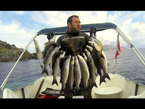 Spearfishing  Chasse En Corse 2015  David Joubin  Corse Vidéos de