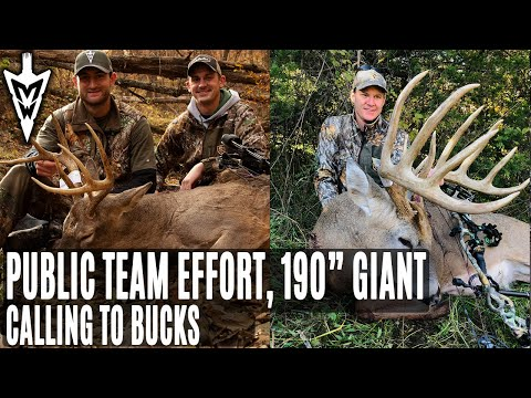 """Call Rutting Bucks: 190"""" Giant Comes Running, Public Land Team Effort 