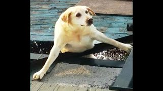 💗Aww - Funny and Cute Animals Compilation 2019💗 #20