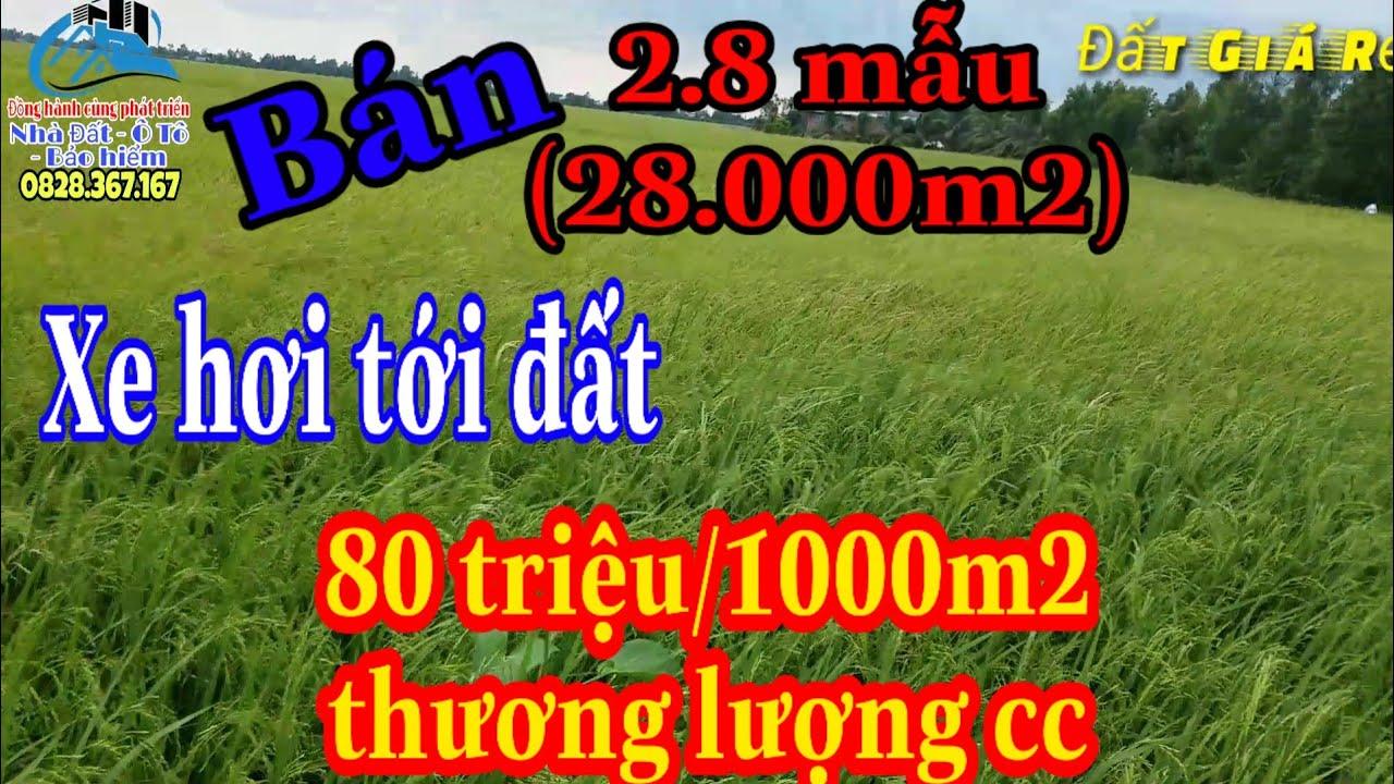 🔴 Đất giá rẻ   Bán Đất Ruộng, 2.8 mẫu, Tân Thạnh, Long an (đã bán)