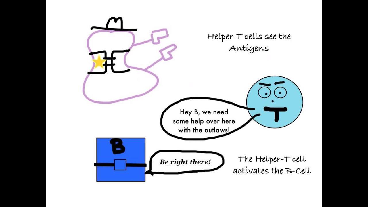The Immune System Cartoon   www.pixshark.com - Images ...