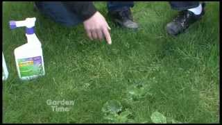 Removing Lawn Weeds