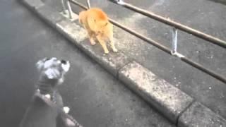 犬の散歩のときに僕の犬が野良猫に猫パンチされた.
