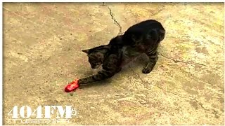 Cat Tries To Steal Food From Dog - Funny Cats Video