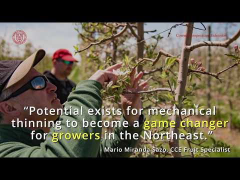 Cornell Cooperative Extension Mechanical Apple Blossom Thinning Trial