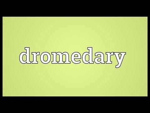 Dromedary Meaning