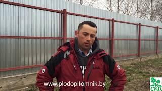 видео Посадка и уход за плодово-ягодными растениями