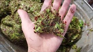 Чем и как кормят белого амура в садках