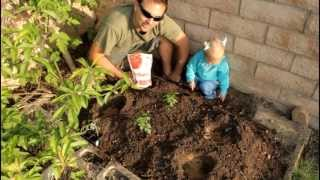 How to Plant Tomatoes with Bone Meal and California