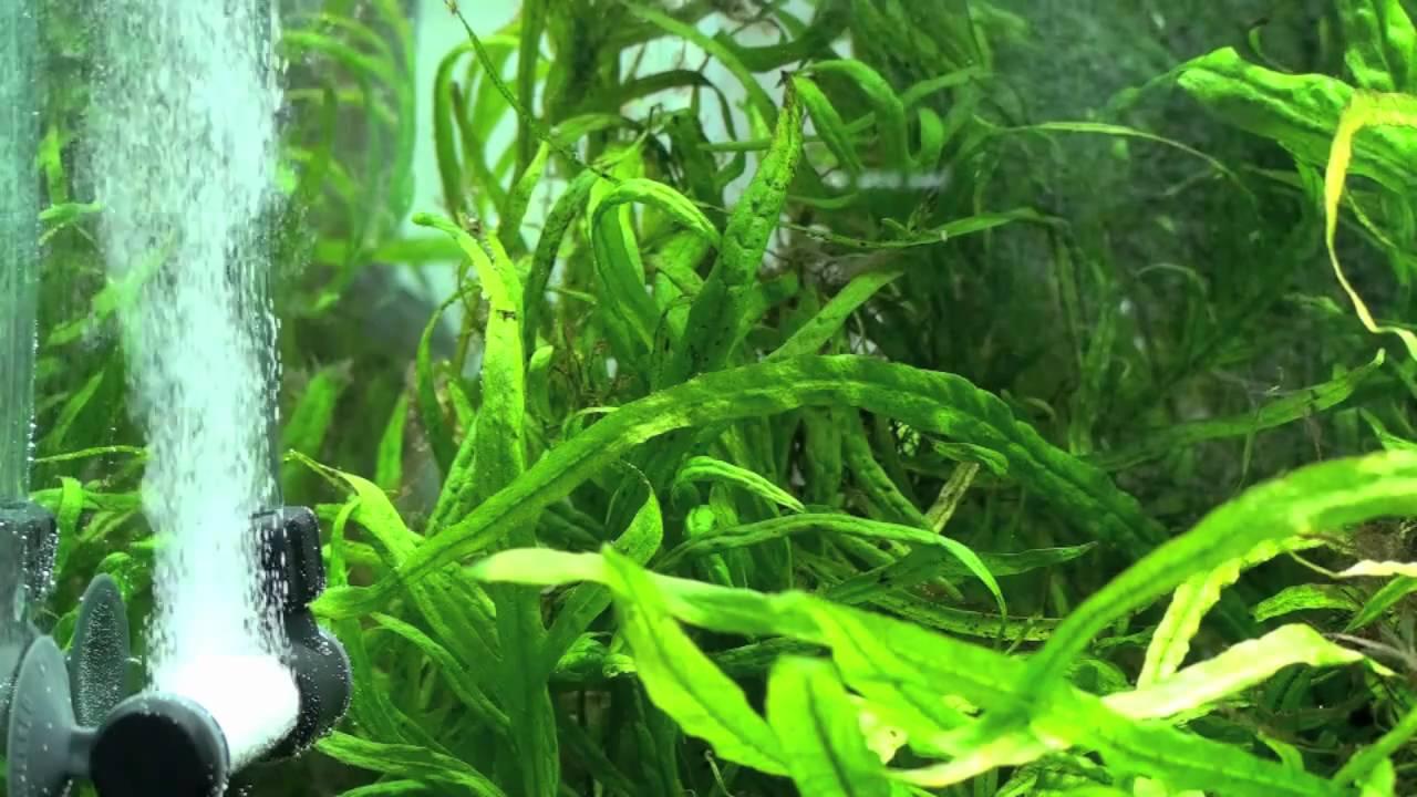 Aquarium fish tank co2 atomizer system - Green Leaf Aquariums Atomic Co2 Diffuser Ii