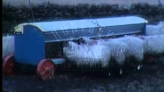 Sheep Farming in the Winter, 1960's - Film 16766