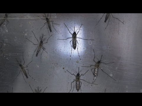 Hawaii Governor Signs Emergency Measure To Fight Zika Virus - Newsy
