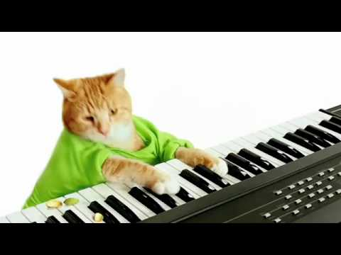 Keyboard Cat's Wonderful Pistachios Commercial!