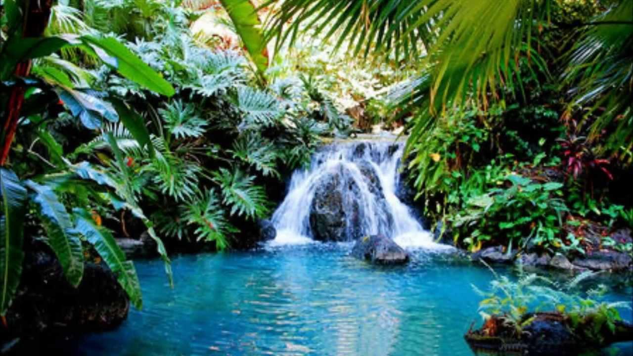 Exotic Waterfall Wallpaper: Healing Pool Meditation