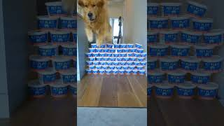 Dog is high jumping champion! Shocks his owners!