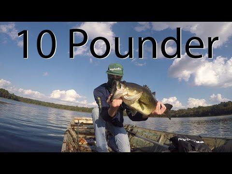10+-pound-bass-eats-swimbait!
