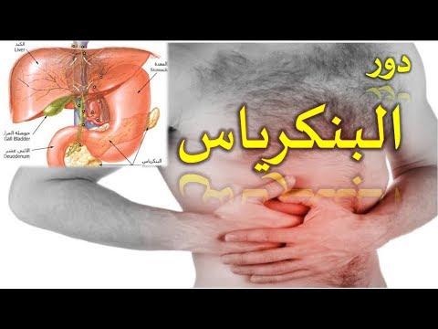 وظيفة البنكرياس و دوره في الجسم الامراض التي تصيبه pancréas